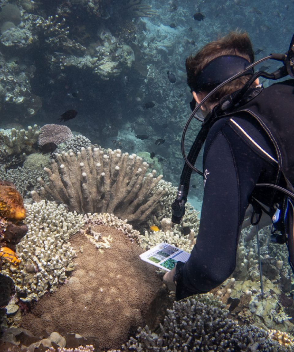 Coral-Diver-Murex-3