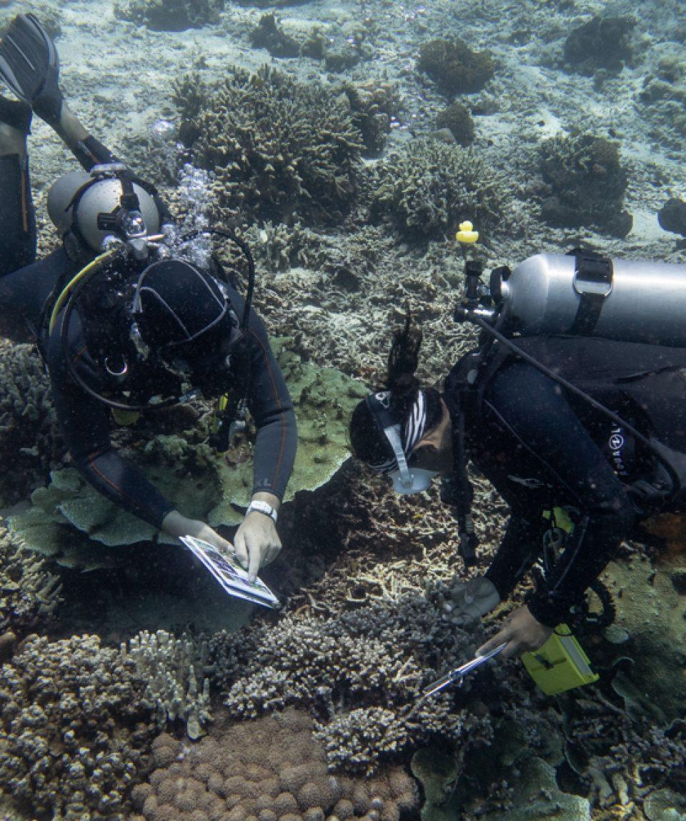 Coral-Diver-Murex-4