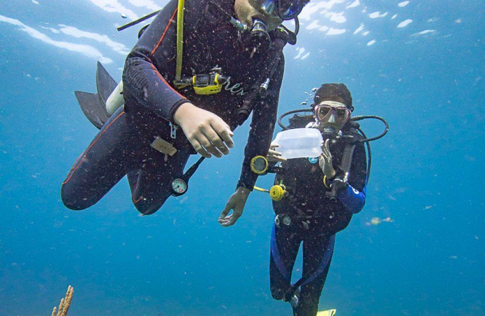 Discover Coral Diving Manado