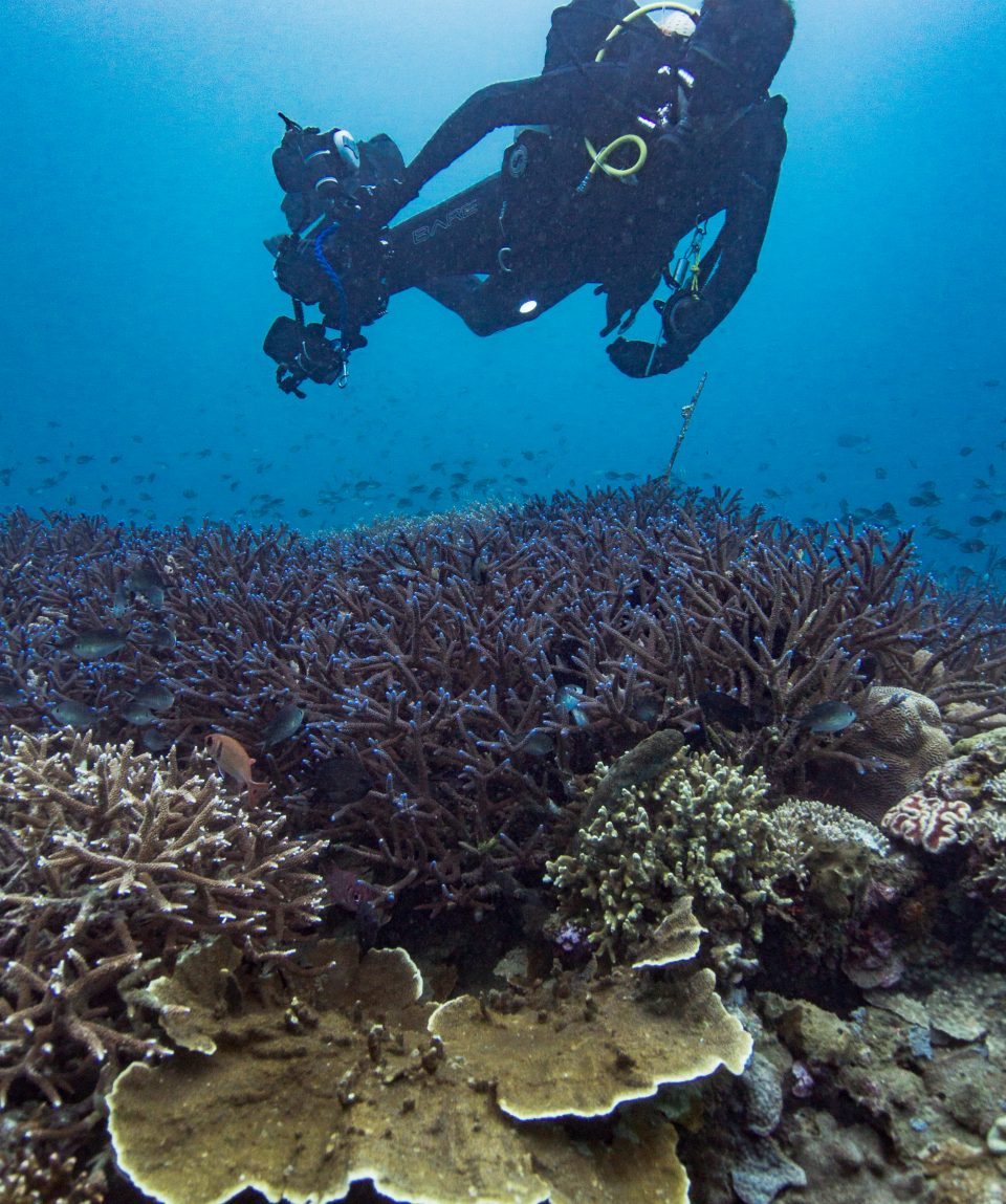 Manado Coral Diving