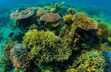 Reef Scene-59