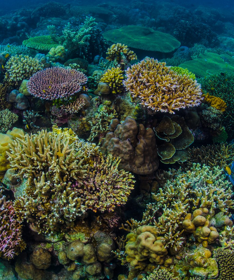 Reef Scene-65