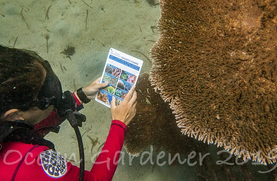 Discover Coral Diving Bali