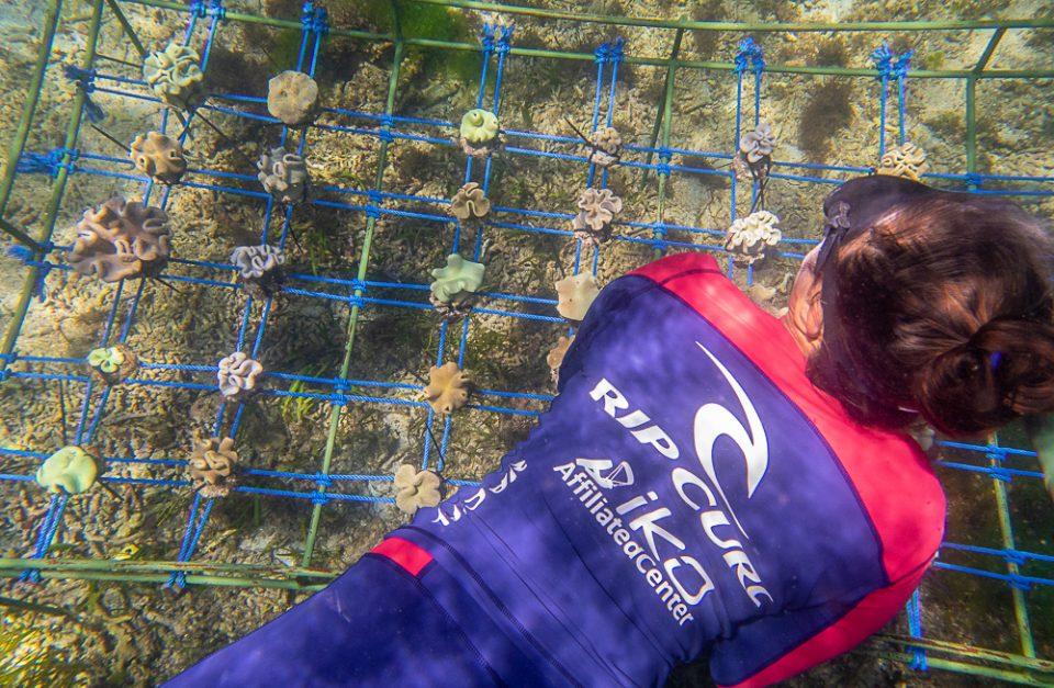 Sanur Snorkeling Tour