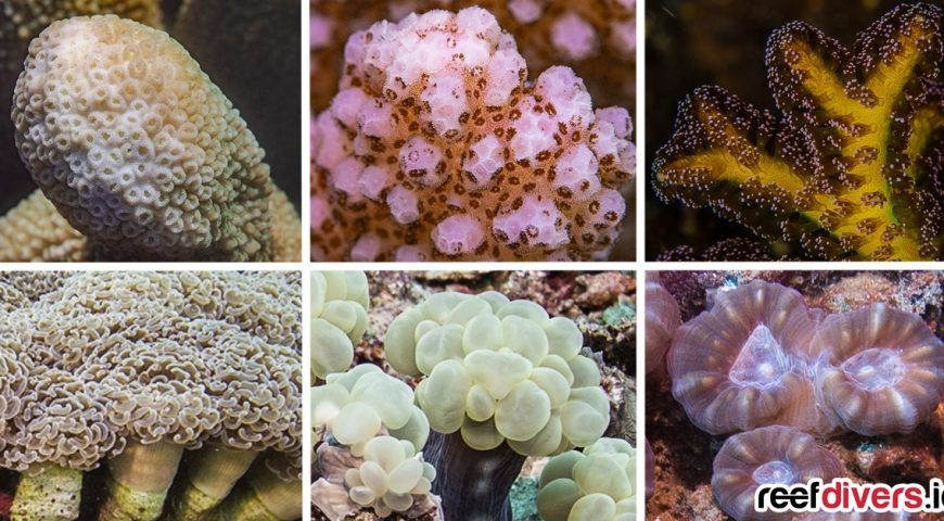 Six-Branching-Corals