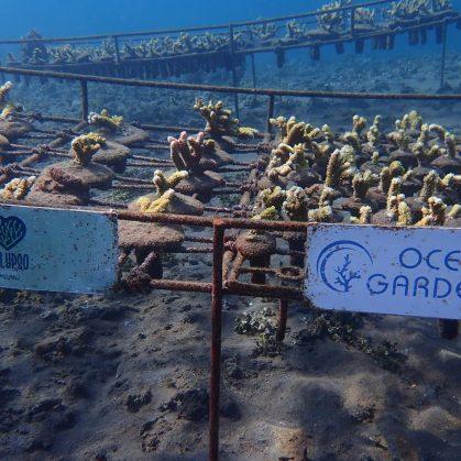 Bali-Amed-corals